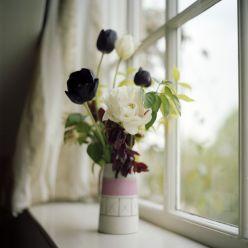 Растения живущие в вазе