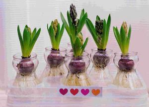Тенелюбивые и прохладолюбивые цветы